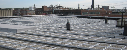 Intensive Or Extensive Green Roof Types Of Green Roofs