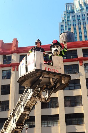 Firefighters take Hot Dog, the FDNY's fire safety mascot, up in the bucket to demonstrate the capabilities of their tower ladder.