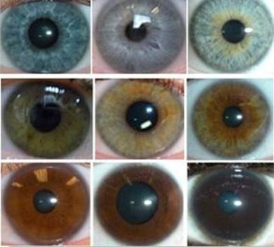Chart also baby eye color chart and babies eye color prediction chart